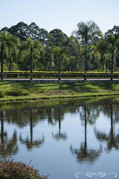 Projeto 365 Inspirações - FOTO 38  #365inspiracoes #reflexo #reflection #agua #water
