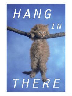 hang in there cat poster 70s images galleries with a bite. Black Bedroom Furniture Sets. Home Design Ideas