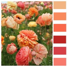 mixed flowers color swatch by Lisa Gorski, via Flickr