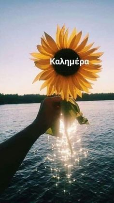 Greek Language, Quotes To Live By, Plants, Photos, Decor, Pictures, Decoration, Quote Life, Greek