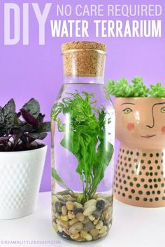 Even if you have a black thumb water terrarium in a glass bottle will thrive with absolutely no effort. See how to add this simple houseplant to your home! Diy Projects For Adults, Diy Projects To Sell, Diy Crafts To Sell, Craft Projects, Crafts For Kids, Outdoor Projects, Water Terrarium, Rainy Day Crafts, Terraria