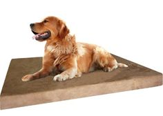 Orthopedic Grade Extra Large Brown Microsuede Waterproof Memory Foam Pad Dog Pet Bed 40 in X 35 in with 4 inches thick + bonus cover included!