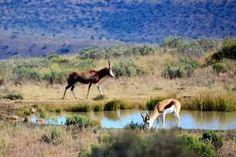 Image result for mountain zebra national park