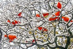 """The red just """"pops"""" right out! Lovely!  Heiner Henninges  www.dasfotoportal.de"""