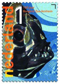 100 jaar Burgers' Zoo  Juweelkardinaalbaars      http://collectclub.postnl.nl/pages/detail/s1/10220000001790-2-21010000000080.aspx