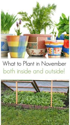 Wondering what to plant in November? Your winter garden chores aren't over yet! Start planting these items both inside and out in your garden bed.