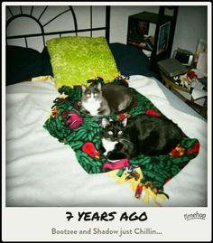 Bootzee & Shadow~2 years old :-)