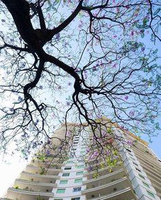 Edifício Viadutos by @carlpop34  #saopaulocity #edificioviadutos