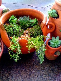 Don't throw out your cracked flower pots! Repurpose them as succulent gardens :) #Succulents