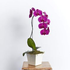 ⭐️⭐️⭐️⭐️⭐️ 5 star review: Outstanding customer service This was my first order with Fabulous Flowers. So impressed with customer service and delivery as requested. The recipient was thrilled with the beautiful gift of an orchid plant, looking just like the pic on the website. Thank you for your attention to this at a difficult time for my family. Orchid Plants, Potted Plants, Cerise Pink, Luxury Flowers, Pink Orchids, Flower Delivery, Customer Service, Bloom, Star
