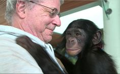 "Animal-rights lawyer Steven M. Wise, as seen in the documentary ""Unlocking the Cage,"" with a chimp named Teko. Primates, Animal Rights Lawyer, Best Documentaries, Chimpanzee, Orangutans, Environmental Issues, Animal Welfare, This Man, Hercules"