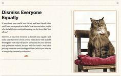 Cat's advice 4