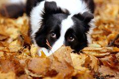 Magic autumn by T-Solnechnaya