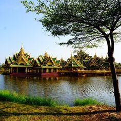 Siam beauty