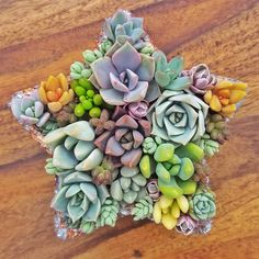 If you've been following me for a while you'll know I have a grá(that's love for the non Irish speakers out there) for making little succulent arrangements. It was with that in mind I decided to make a planter that was perfect for it and so my star shaped planter(I should really thing a fancy name for them😂) was born! 🌱Link in my bio to my etsy 🌱 Succulents In Containers, Planting Succulents, Succulent Planters, Succulent Arrangements, Star Shape, Container Gardening, House Plants, Lily, Shapes