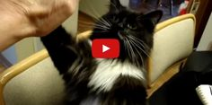 I'm From a Shelter and Look What I Can Do!  Check out this great video of a very smart kitty!