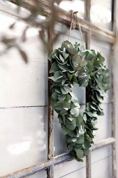 Perfect eucalyptus or bay leaf