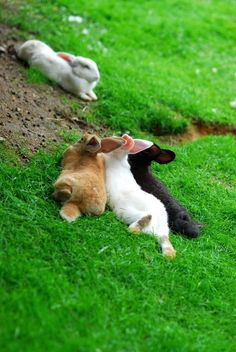 """llbwwb: """" For the bunny lovers:) by Picturegirl. All Gods Creatures, Cute Creatures, Beautiful Creatures, Animals Beautiful, Animals And Pets, Baby Animals, Funny Animals, Cute Animals, Tier Fotos"""