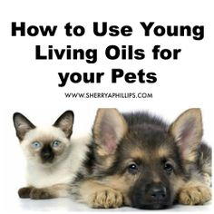 How to Use Young Living Oils for your Pets at http://sherryaphillips.com/use-young-living-oils-pets/ #holistic #health #pets