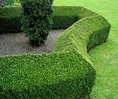 G R E E N on green hedging + metal