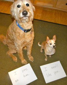 dog shame pair