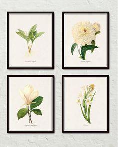Redoute White Botanicals Print Set No. 1 - Giclee Canvas Art Prints