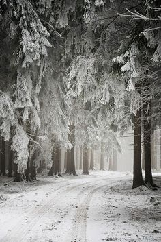 snow in the forest  #winter #nature #photography