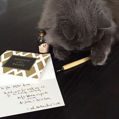 A full day for our CEO today, calligraphy to do too. We pay attention to the tiny details. #maisondesroses #catexecutiveofficer #bloombox #calligraphy #tatler #thankyou #Mischka #catatwork #indianink #sepia #felinedesigner