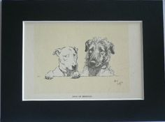 Bull terrier Irish Wolfhound Book on Dogs Cracker Micky models Signed mounted vintage 1928 Cecil Aldin dog plate print Unique gift present by Hollysprints on Etsy