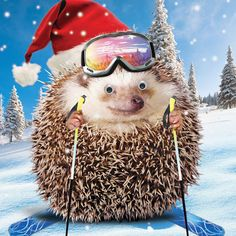Hedgehog-On-Skis-Single-Xmas-Card-Funny-3D-Goggly-Moving-Eyes-Christmas-Skiing