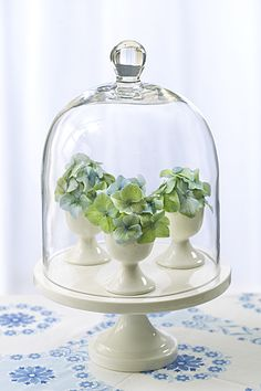 cloche w/ mini hydrangeas