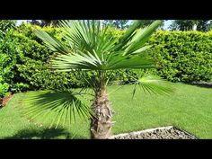 Szubtrópusi modern kertépítés ötletek Sd, Facebook, Modern, Plants, Trendy Tree, Plant, Planets