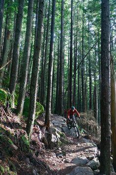 Biker a solas con el bosque