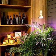 Plant Light Primula är vår bästa växtlampa och finns för olika ändamål som belysning av inomhusväxter uppdragning av plantor och för övervintring av växter. Finns i färgerna silver koppar vit och svart. Snygga är de också!  #plantlight #primula #indoorplants #inomhusodling #övervintring #växter #växtbelysning #växtlampa #plantuppdragning #sticklingar #plantor #prydnadsväxter #wexthuset