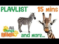 AFRICAN ANIMALS   Animals playlist for children. Kids videos. Kindergarten   Preschool learning - YouTube
