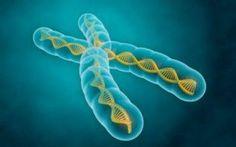 La teoria cromosomica di Sutton e Boveri Nel millenovencentodue il biologo americano Walter Sutton si accorse che i cromosomi risultavano appaiati fin dall'inizio della prima divisione meiotica. Successivamente a questa scoperta, Sutton con #cromosomi #dna #teoriacromosomica