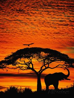 African Skies Elephant and Tree at Sunset