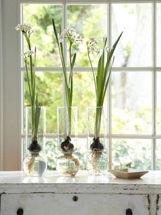 @expandfurniture Forced bulbs for indoor garden #ExpandFurniture #spacesaver #smartlivinginstyle