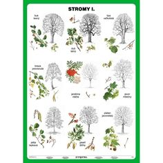 Stromy I. diel Brain Training, Elementary Science, Matching Games, Kids Education, Kids Learning, Montessori, Free Printables, Diy And Crafts, Preschool