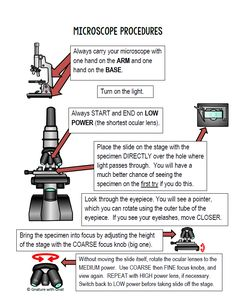 Basic Steps For Focusing A Compound Light Microscope Study Biology Biology Lessons Microscope Activity