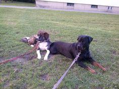 Hunde Foto: Gaby und Nico & Nikita - Meine zwei Babys Hier Dein Bild hochladen: http://ichliebehunde.com/hund-des-tages  #hund #hunde #hundebild #hundebilder #dog #dogs #dogfun  #dogpic #dogpictures