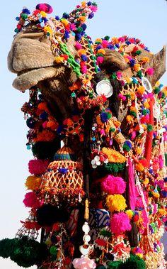 Amber Interior Design: Camel Tassels