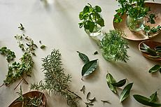 Different herbs on plaster table for health & wellness. Health & Wellness gallery by Trent Lanz for Stocksy United - Royalty-Free Stock Photos. assortment, basil, bay leaf, cilantro, color, daylight, different, garden, glass, green, greenery, health, healthy, herb, horizontal, indoors, kitchen, leaf, mint, nobody, parsley, plaster, plate, produce, rosemary, seasoning, spice, surface, table, tan, thyme, water, wellness