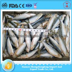 Good Quality Frozen Whole Hard Tail Scad Fish for African.