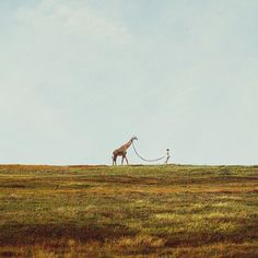 Who doesn't want a giraffe on a leash. For some reason I think Shel Silverstein should write a poem about this picture. Animal Kingdom, Art Photography, Stunning Photography, Cute Animals, Baby Animals, Around The Worlds, In This Moment, Travel, Walking