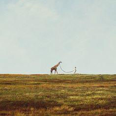 Wie ben ik om het idee te veroordelen. Als iemand een giraf wil als huisdier, tja...