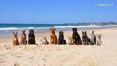 Já imaginou 11 cachorros e 1 gato juntos em um passeio pela praia, com direito a natação e surf? Ent...