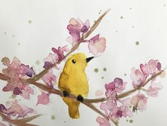 Yellow Warbler no. 140 Original Watercolor Painting by Angela Moulton