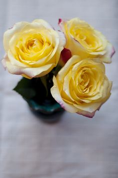 yellow-flowers-three.png (500×750)