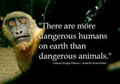 Appallingly, the world's animals have far surpassed the world's humans in our shared evolutionary journey!